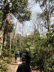 Inside the lawoachara forest